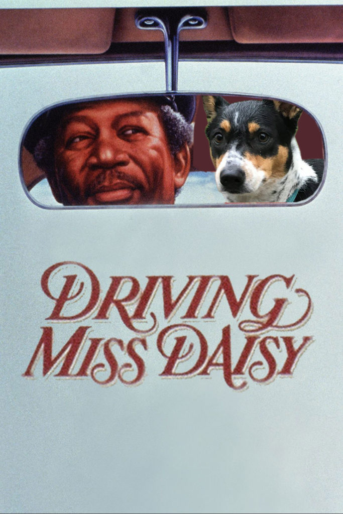 Driving Miss Daisy Movie Poster with Dog Daisy